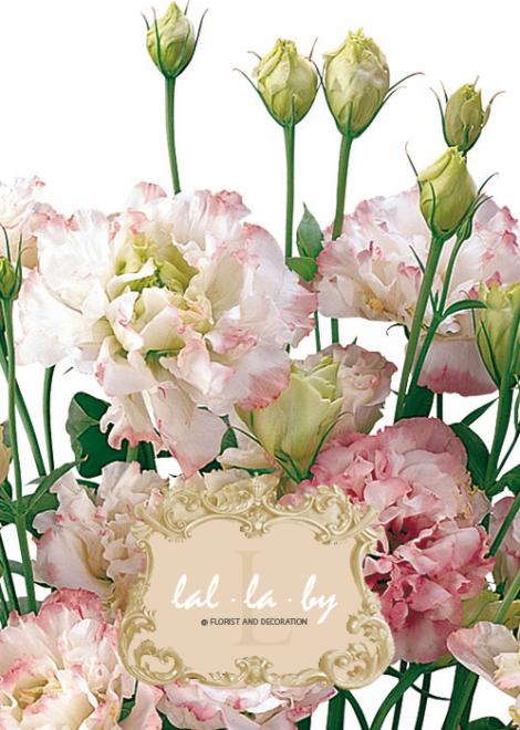 ขายส่งดอกไลเซนทัส