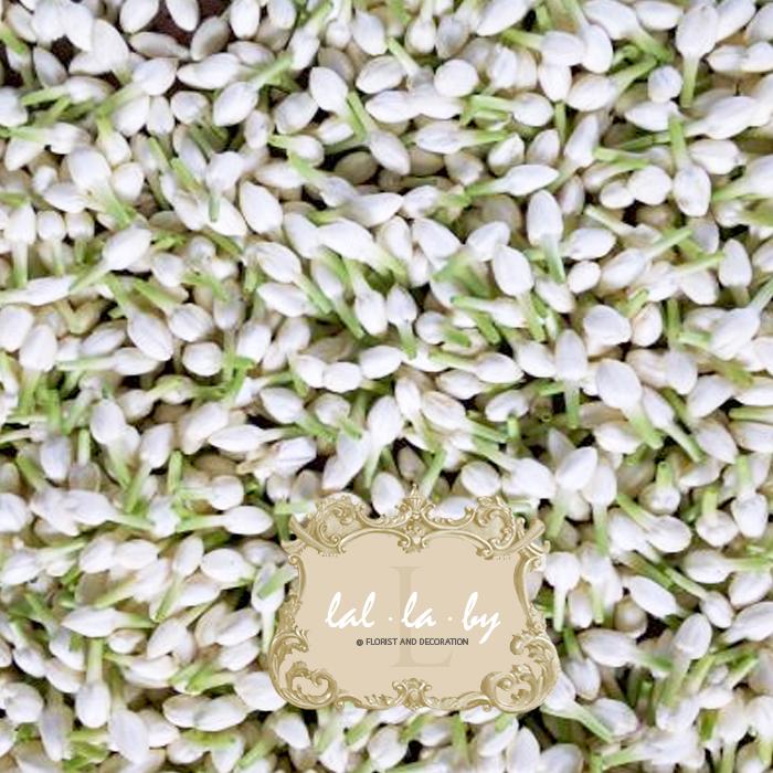 ดอกมะลิ: จำหน่าย ดอกมะลิ อินโด ราคาส่ง จัดส่งทั่วประเทศ