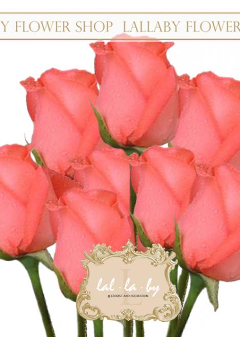 ดอกกุหลาบราคาส่ง