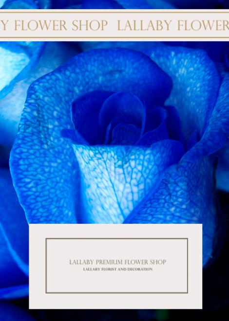 ดอกกุหลาบฮอลแลนด์ สีน้ำเงิน ราคา